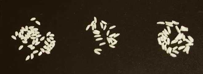 Rice type